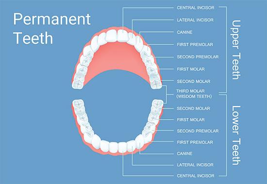 wisdom teeth dental diagram